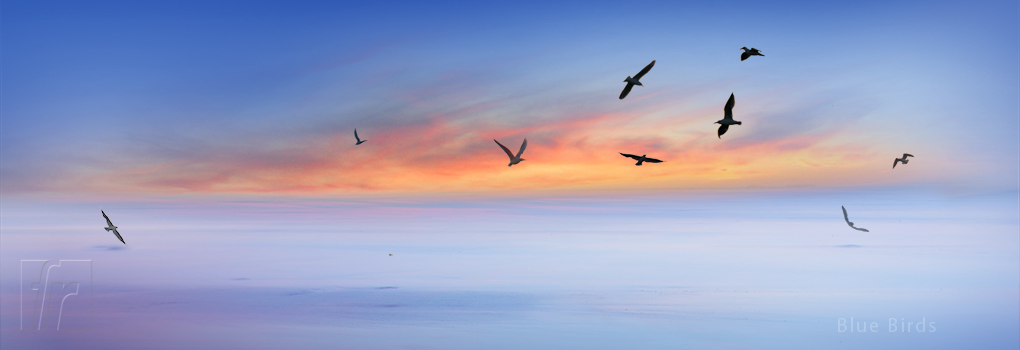 Blue-Birds_1020x350